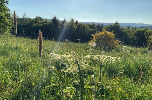 Article : Chronique des semeurs de mauvaises herbes